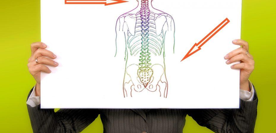 kręgosłup - najczęściej występujące urazy i rehabilitacja